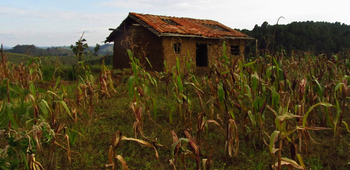 Agricultural policies in Africa could be harming the poorest