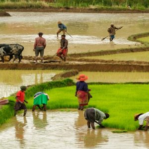 Nigeria's Foreign Exchange Earnings Will Be 70% Agriculture by 2050