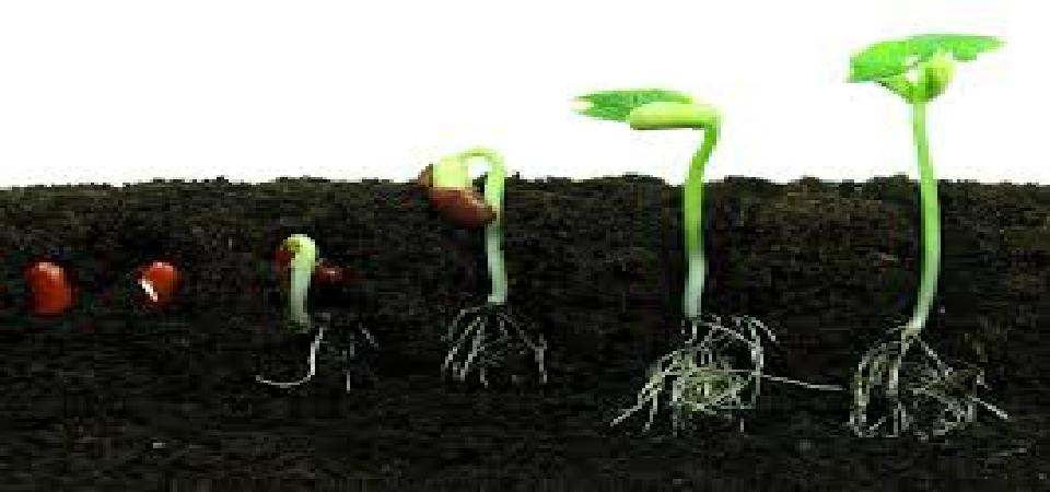 Organically Regenerative Web Companies